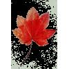 Leaf - Ilustracije -