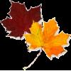 Leaf - Illustraciones -