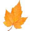Leaf - Illustrations -