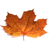 Leaf - Ilustracje -