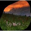 Nature Grass - Nature -