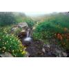 Creek - Priroda -