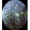 Nature - Nature -