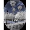 Winter - 自然 -