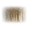 Forest - Natura -