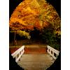Bridge - Natur -