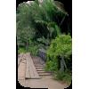 Bridge - Nature -