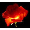 Rose - Biljke -