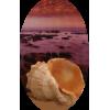 Shell - 插图 -