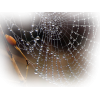 Spider Net - Nature -