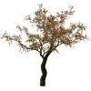Tree - Biljke -