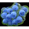 Tulips - Plants -