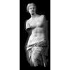 Venus - Illustrations -