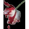 cvijet - Pflanzen -