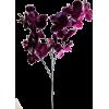 cvijet flower - Plants -