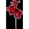 cvijet - Растения -