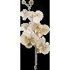 cvijet - Rastline -