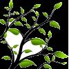 biljka - Pflanzen -