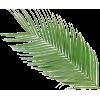 palmin list - Plants -