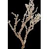 ilustracija - Plants -