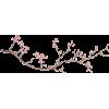 branch - 植物 -