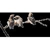 ptice na grani - Animals -