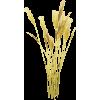 Grass - Pflanzen -