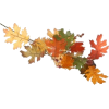jesenje lišće - Plants -