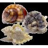 školjke - Animals -