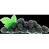 Kupine - Frutas -