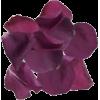 Petals - Plants -