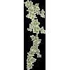 lišće - Rośliny -