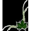 list - Plants -