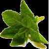 metvica - Plants -