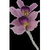 orhideja - Plants -