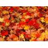 jesen - My photos -