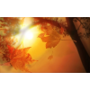 šuma jesen - My photos -