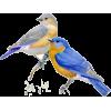 ptičice - Životinje -