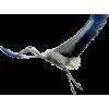 Stork - Živali -