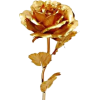 ruža - Biljke -