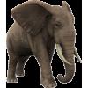 slon - Animals -