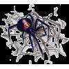 Spider - Animals -