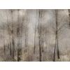 Wood - My photos -