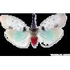 Wing - Animals -