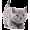 kitten - Animals -