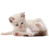 kitten - Animals -