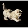 Kitten - Illustrazioni -