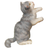 Kitten - Ilustrationen -