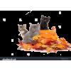 kittens - Životinje -