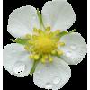 kwiat - Plants -